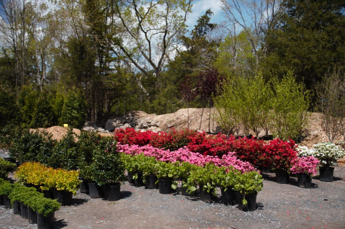 decorative stone,decorative mulch, decorative stone, Rock N Mulch Tree Farm, shrubs, mulch, mulching, hydroseeding, erosion control, decorative mulch, retaining wall, trees, shrubs